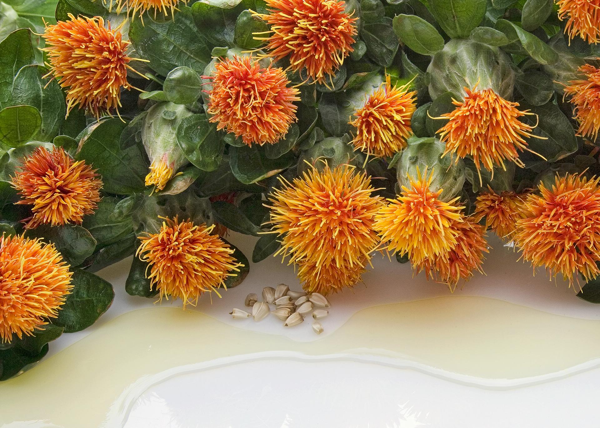 Safflower-Oil_Henry-Lamotte-Oils