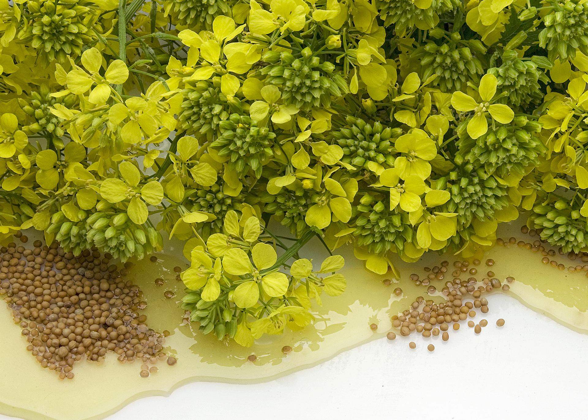 Mustardseed-Oil_Henry-Lamotte-Oils