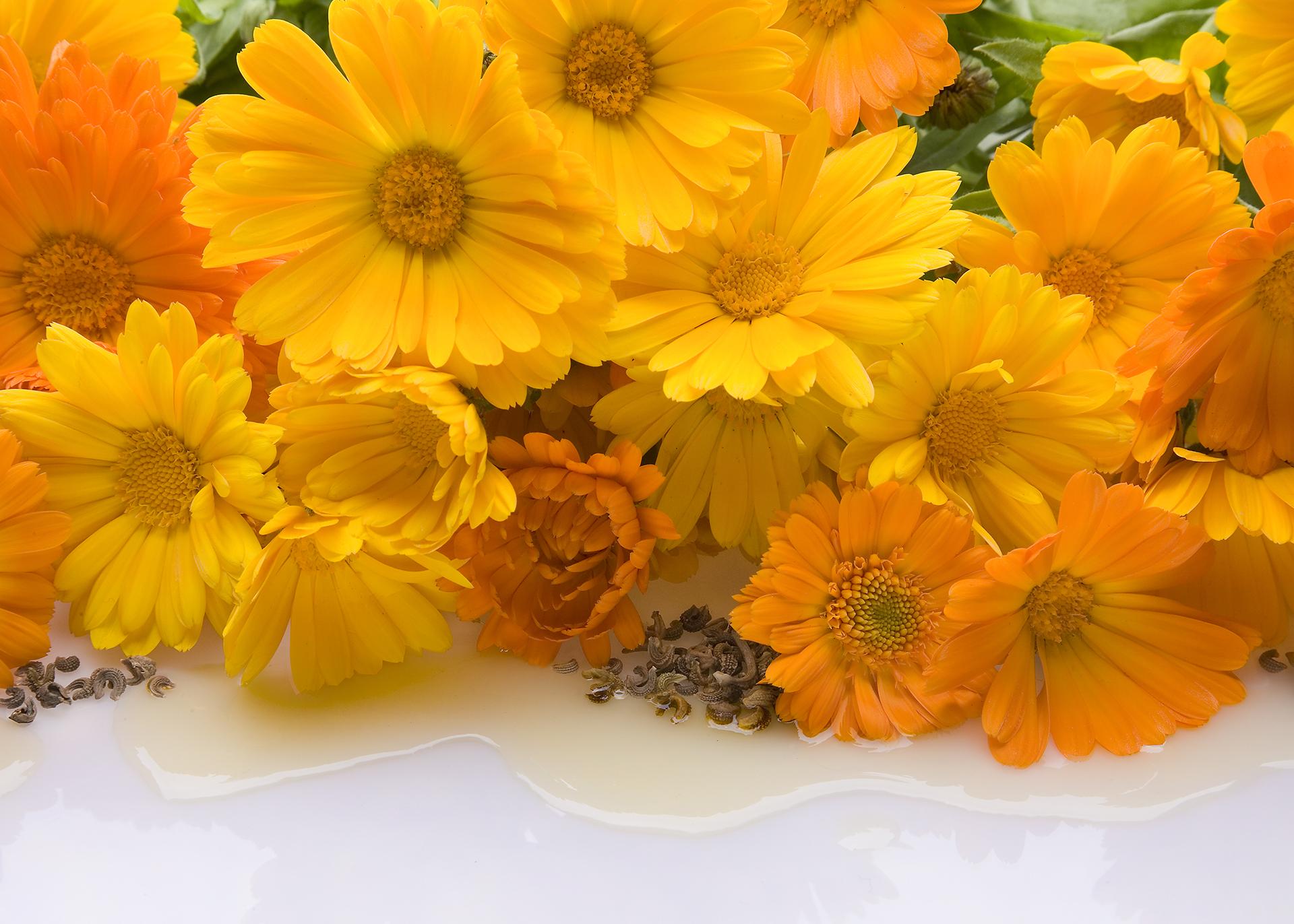 Calendula-Oil_Henry-Lamotte-Oils