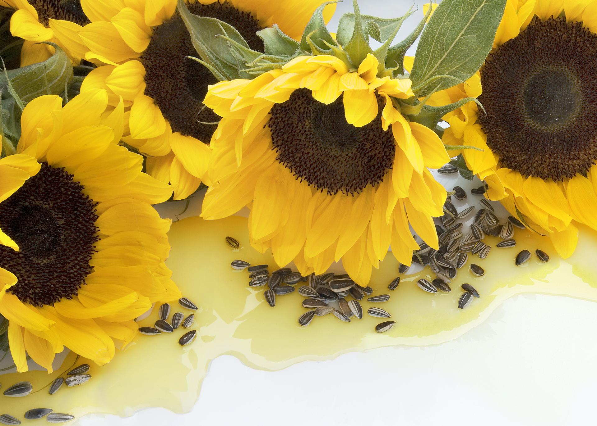 Sunflower-Oil_Henry-Lamotte-Oils