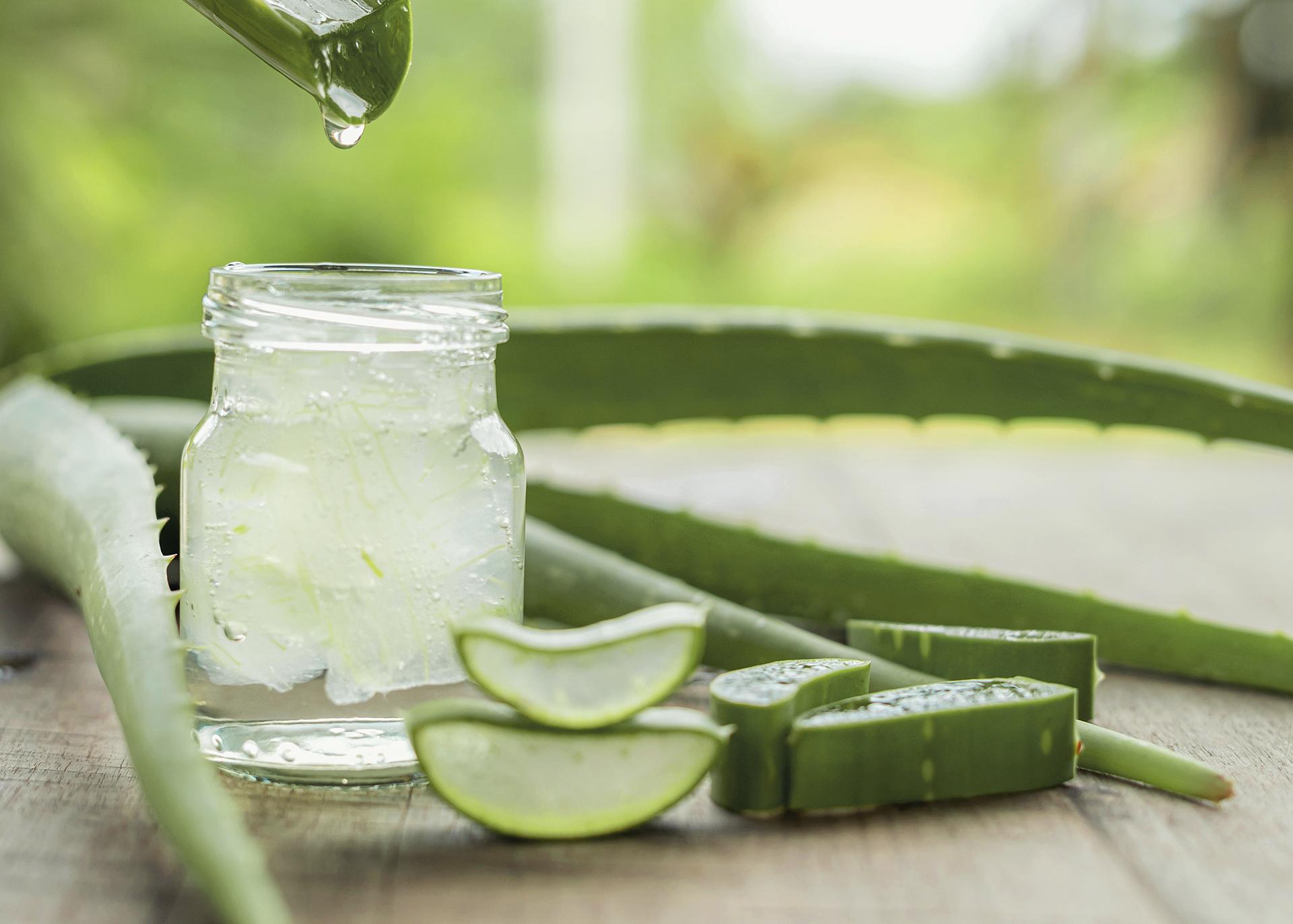 Aloe-Vera_Henry-Lamotte-Oils