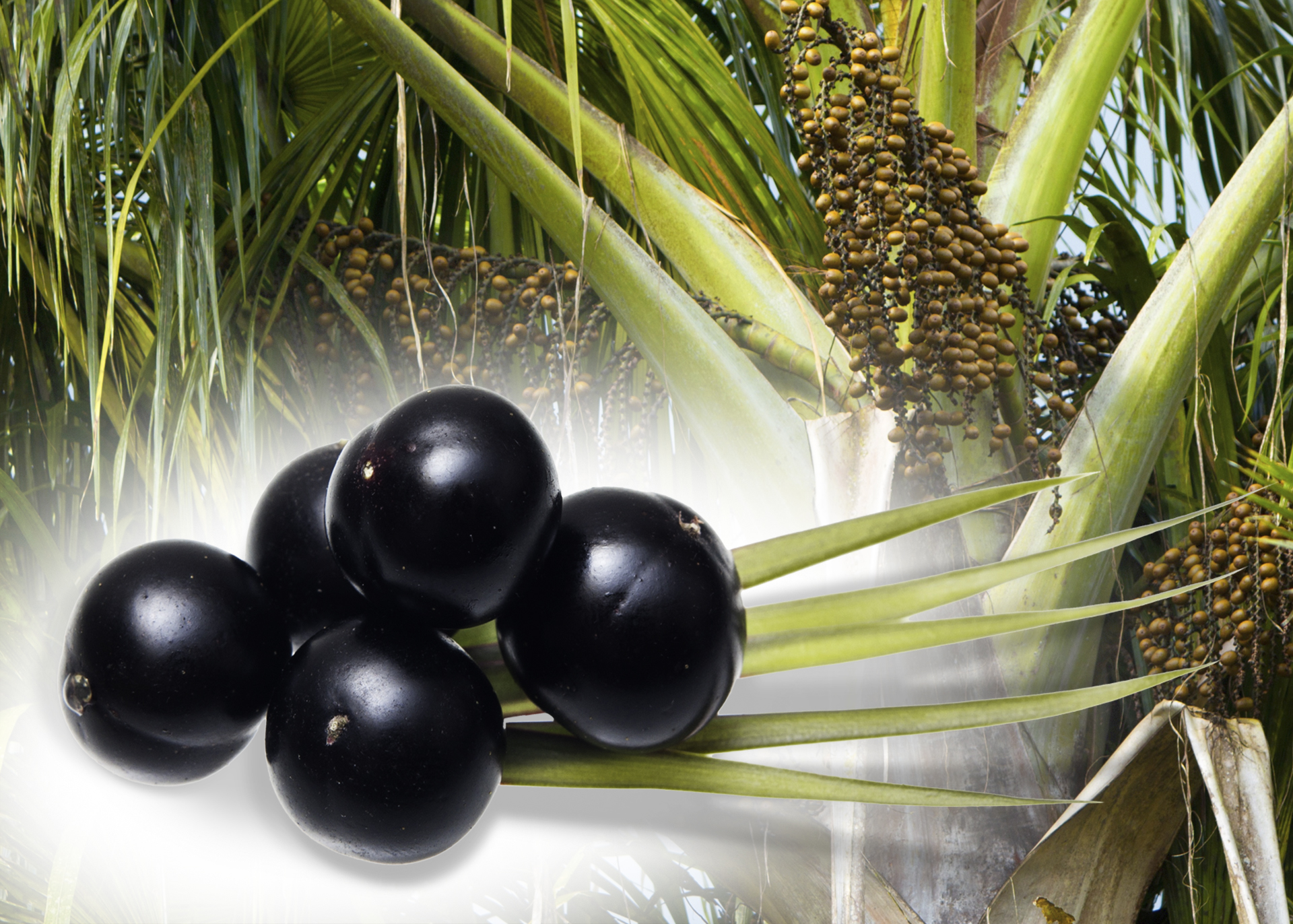 Acai-Oil_Henry-Lamotte-Oils