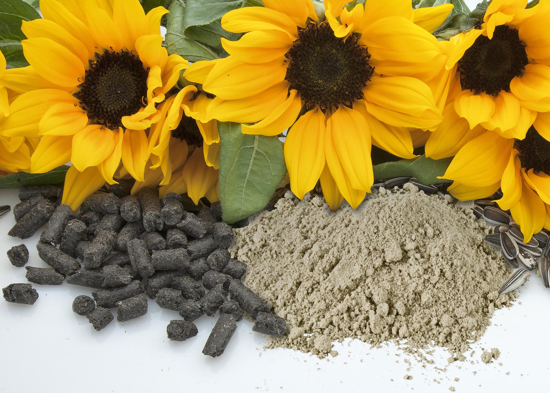 Sunflower-Press-Cake_Sunflower-Flour_Henry-Lamotte-Oils