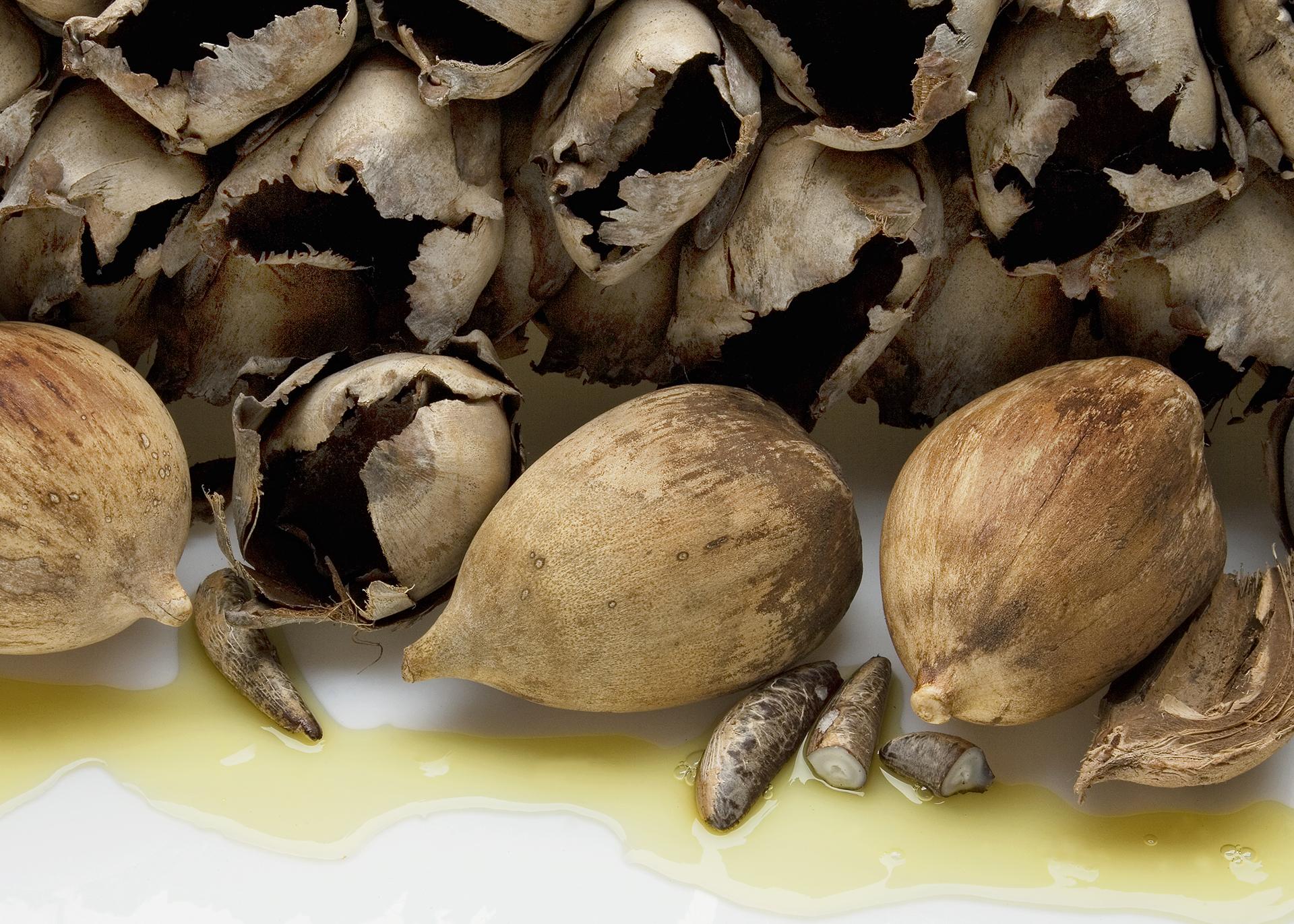 Babassu-Oil_Henry-Lamotte-Oils