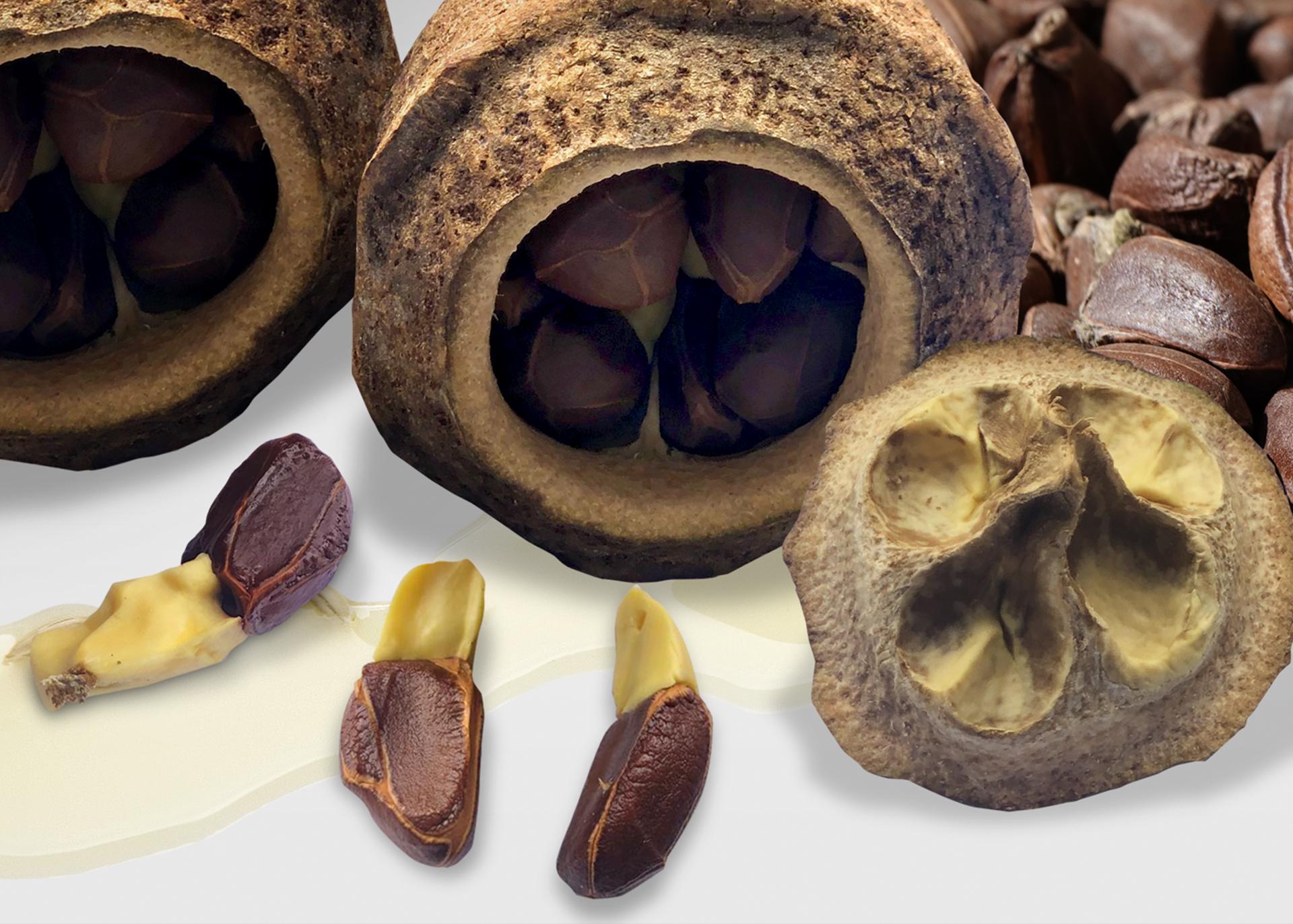 Paradise-Nut-Oil_Henry-Lamotte-Oils