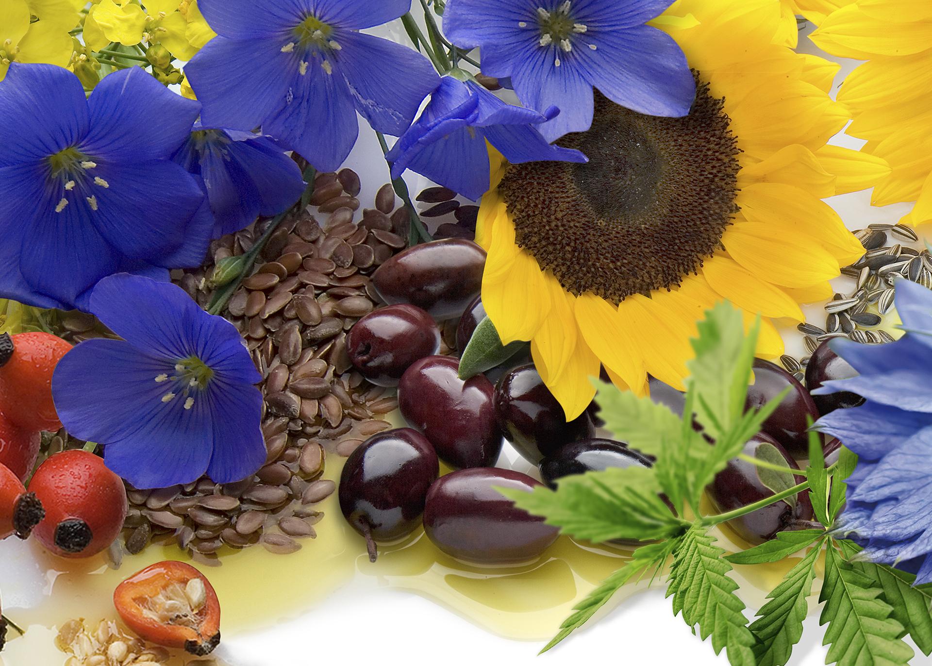 Oils-Fats-Waxes-by_Henry-Lamotte-Oils