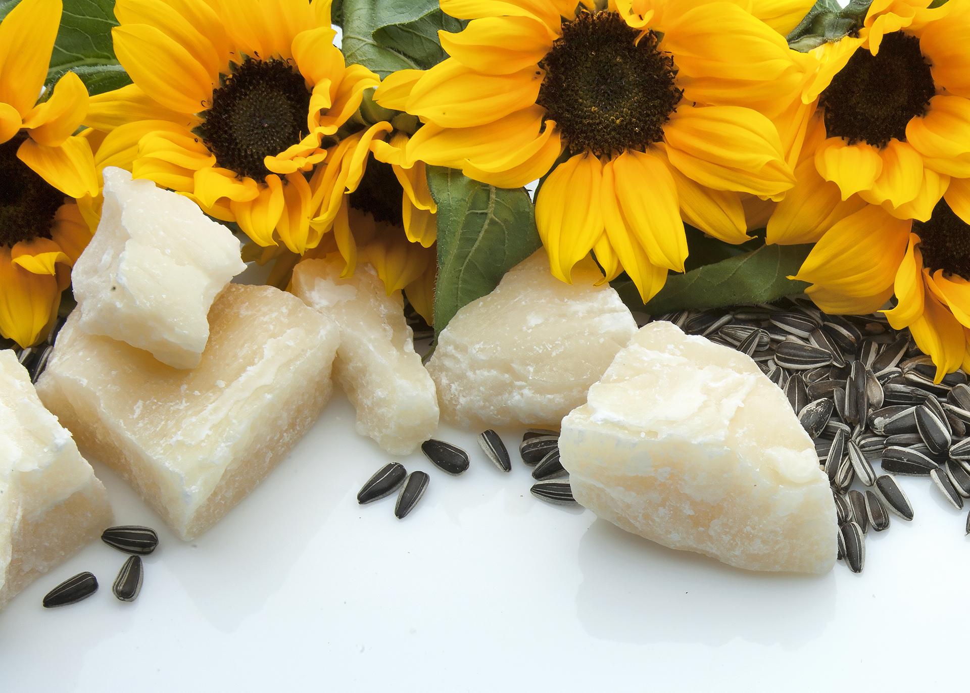 Sunflower-Wax_Henry-Lamotte-Oils