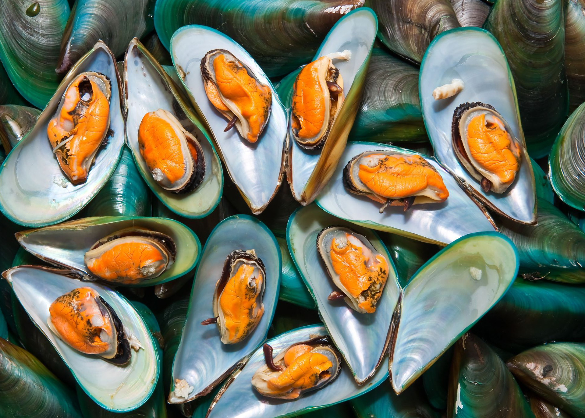 Green-Lipped-Mussel-Powder_Henry-Lamotte-Oils