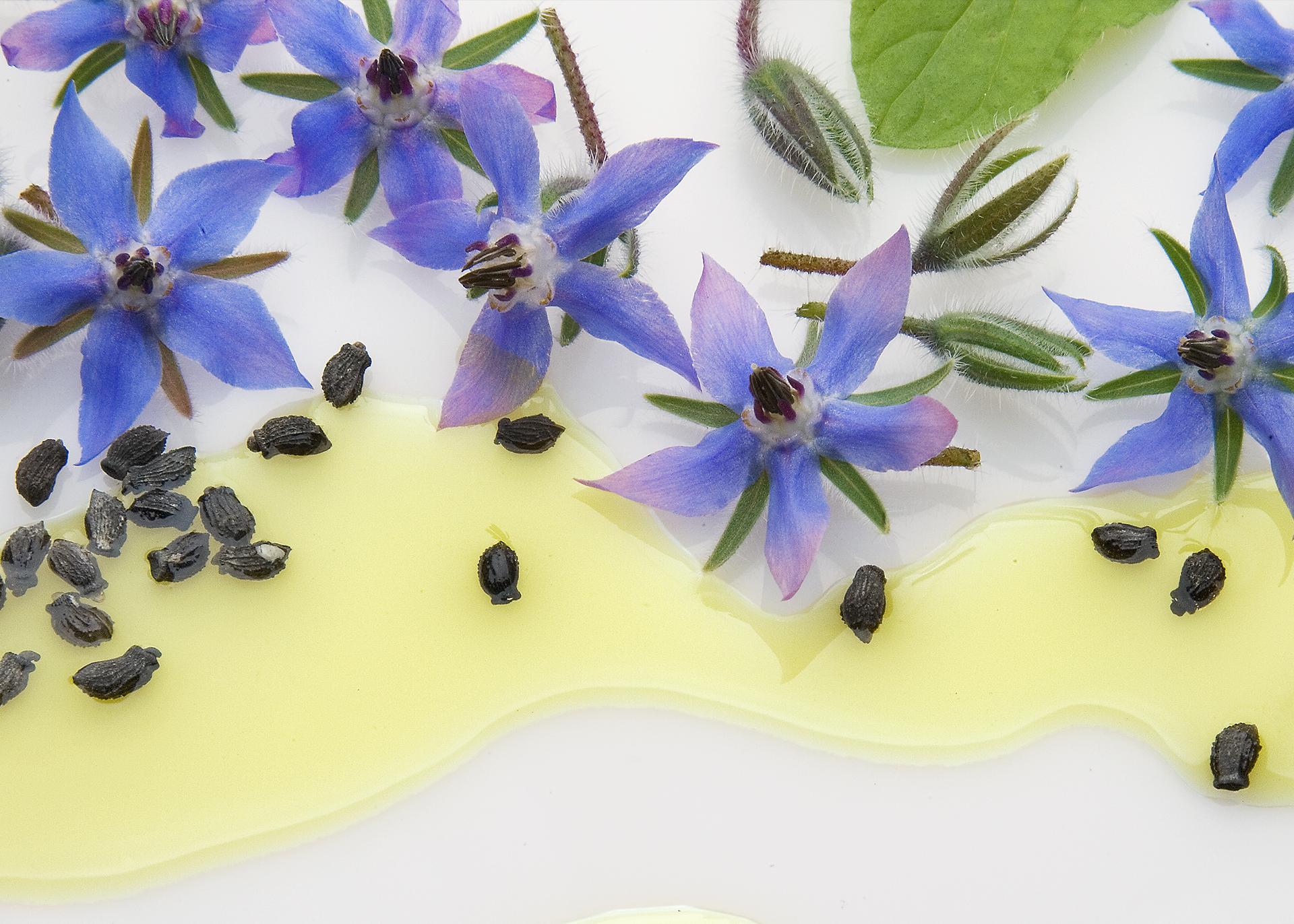 Borageseed-Oil_Henry-Lamotte-Oils