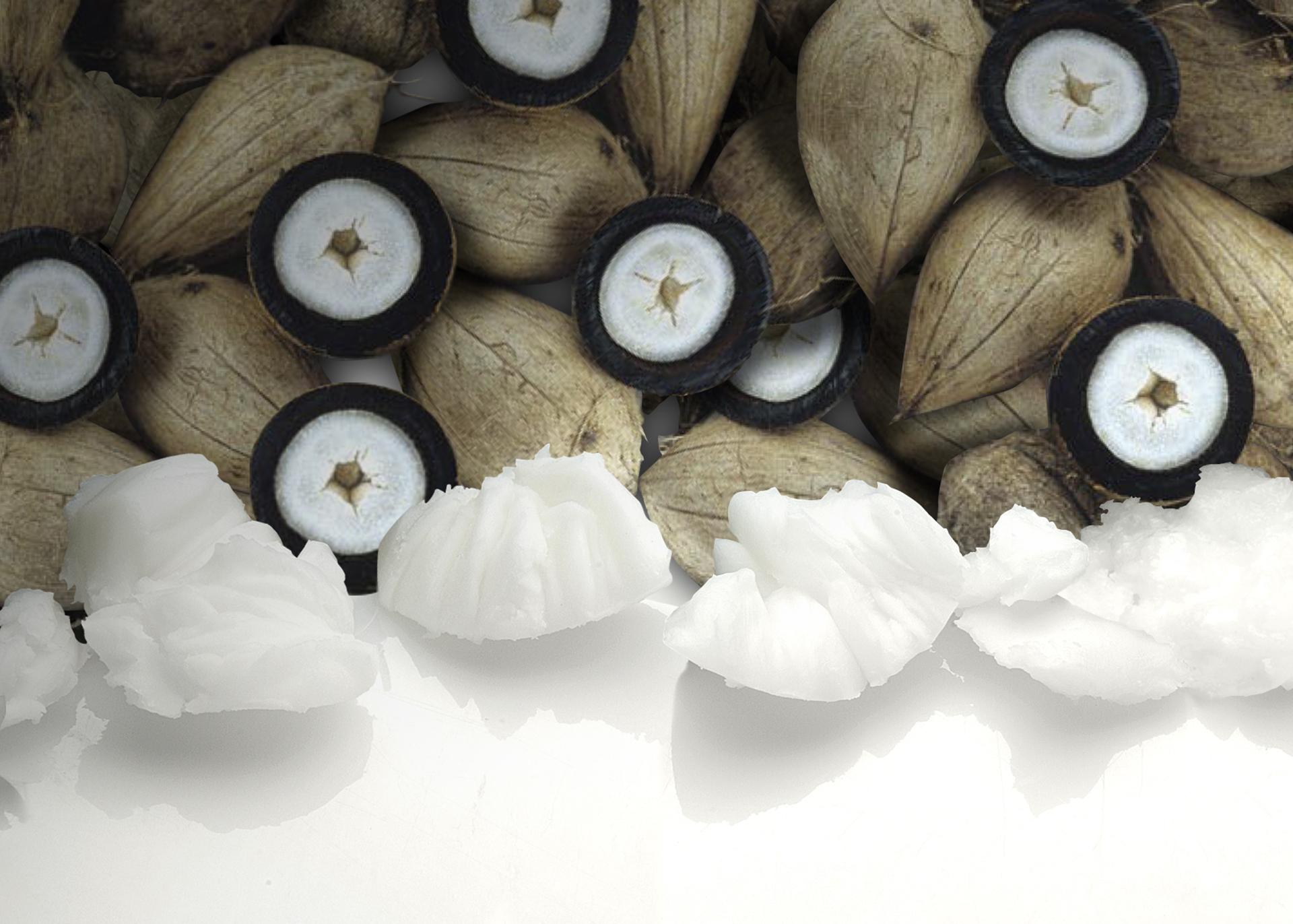 Murumuru-Butter_Henry-Lamotte-Oils