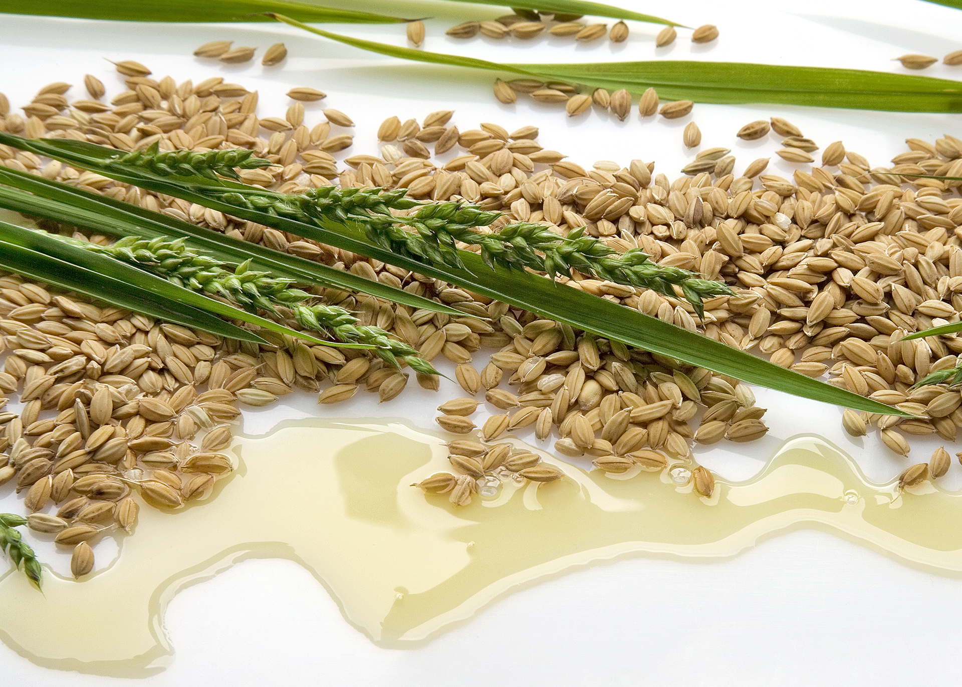 Rice-Bran-Oil_Henry-Lamotte-Oils