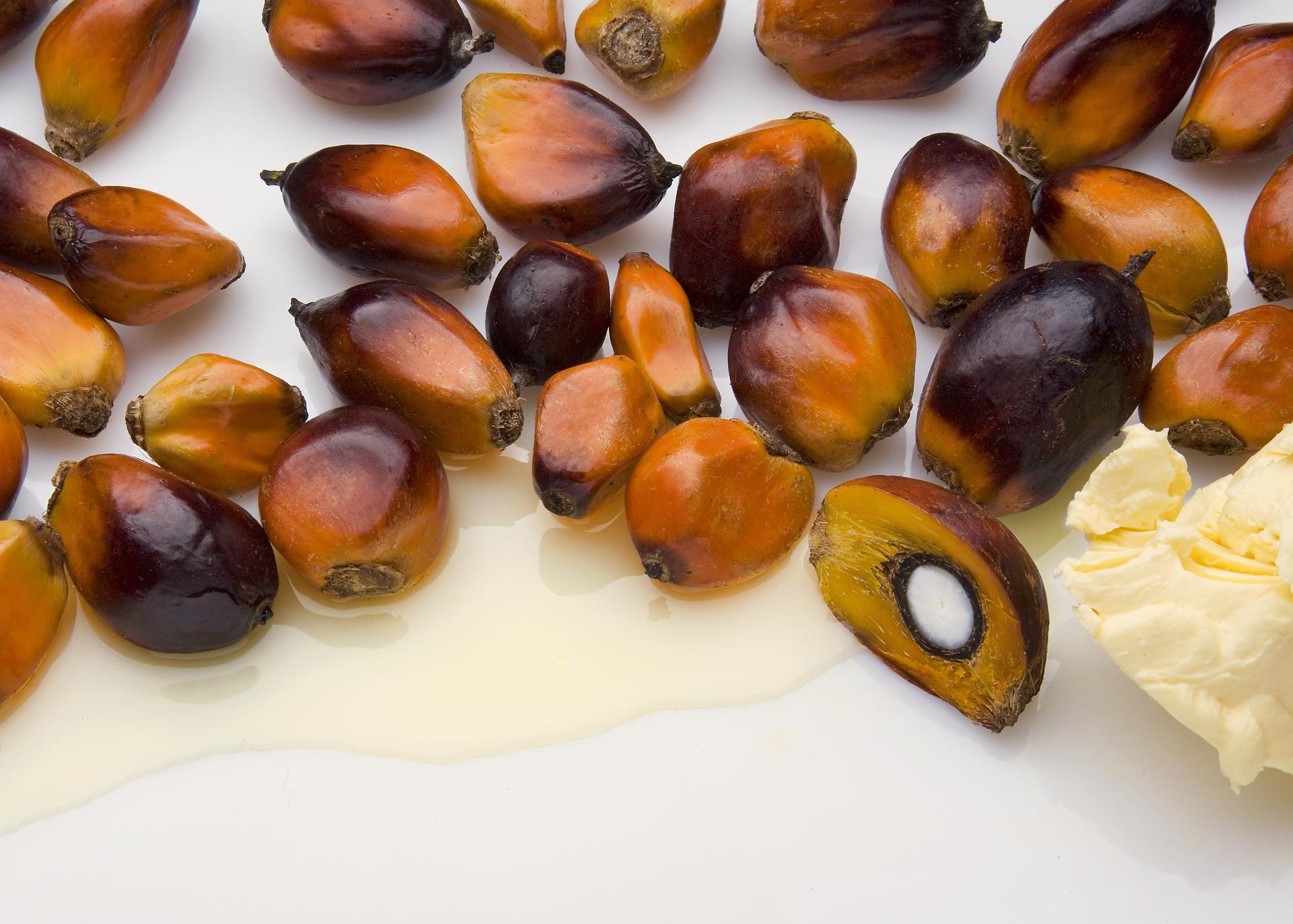 Palmstearin_Henry-Lamotte-Oils