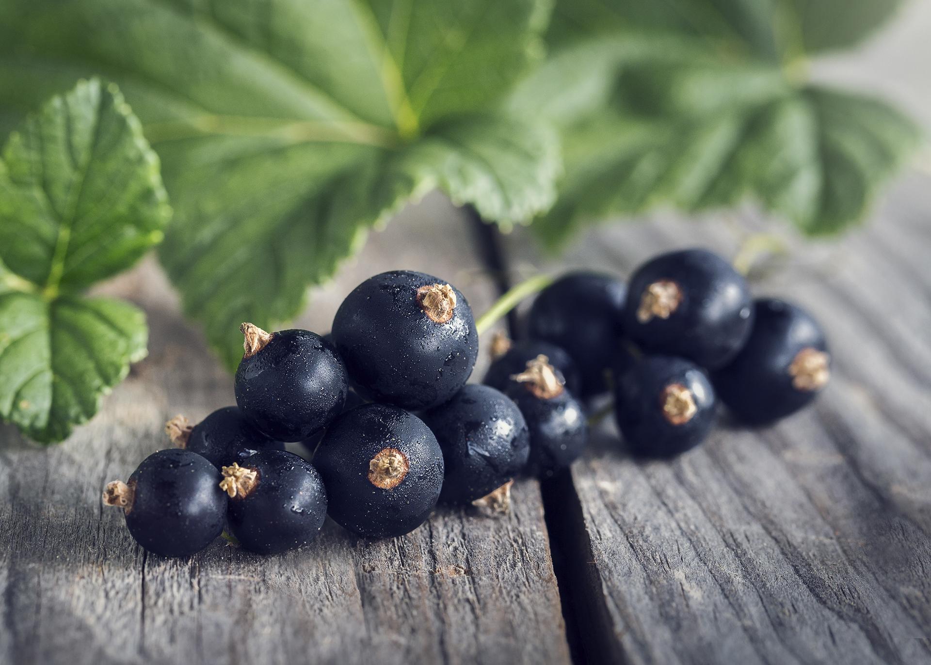 Black-Currant-Seed-Oil_Henry-Lamotte-Oils
