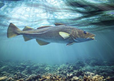 Fischleberöle